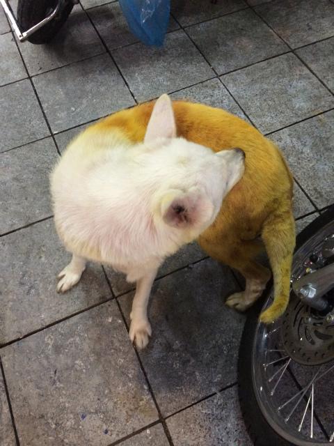 変な色の犬